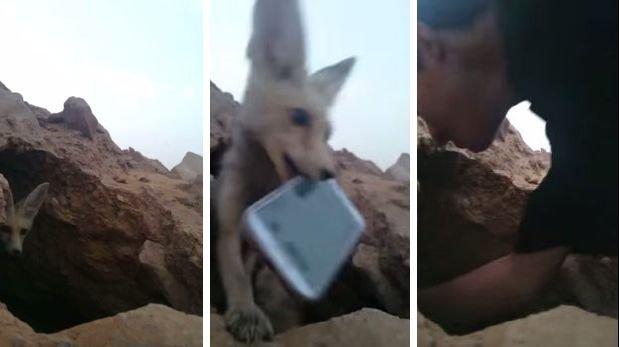 YouTube: zorro roba teléfono de 'paparazis' [VIDEO