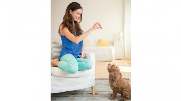 Cómo hacer para que tu perro te obedezca