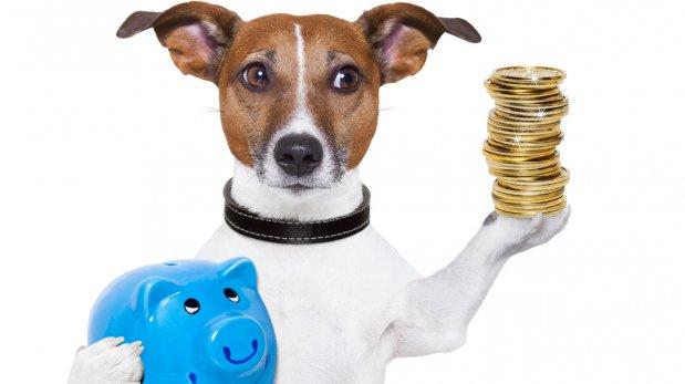 Sigue estos consejos para cuidar tu mascota ahorrando dinero