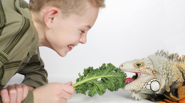 Cuidado especial: aprende a tener una iguana como mascota