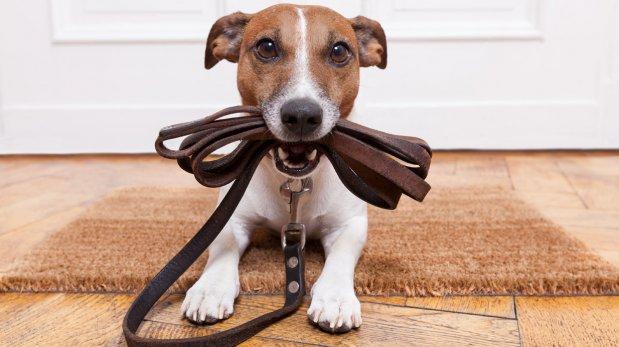 ¿Cómo cambia tu hogar cuando llega una nueva mascota?