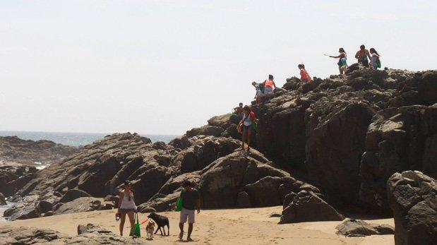 Colas a Bordo: conoce el proyecto para viajar con tu perro