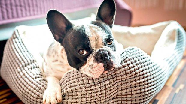 Dulces sueños: elige la cama ideal para tu mascota