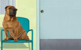 Hoteles para mascotas: Viaja tranquila en Fiestas Patrias