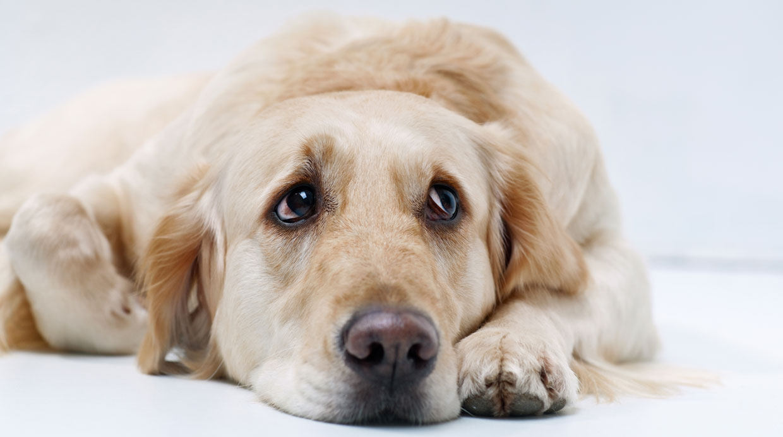 Tu mascota también puede sufrir de depresión
