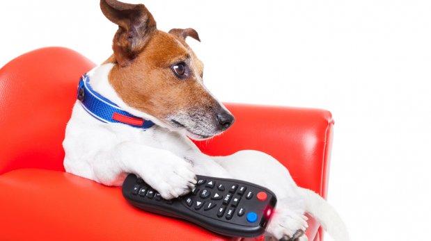 ¿Los perros y gatos pueden ver televisión?
