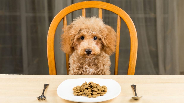 ¿Cuánta comida le debo dar a mi perro?