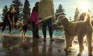 Perros pueden bañarse tranquilos en piscinas públicas de Canadá