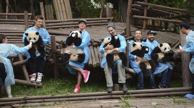 Hotel ofrece paquete especial para visitar a los osos panda
