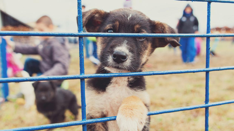 Webs y redes sociales para adoptar mascotas