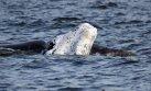 Uruguay: avistamiento de ballenas, el nuevo atractivo turístico