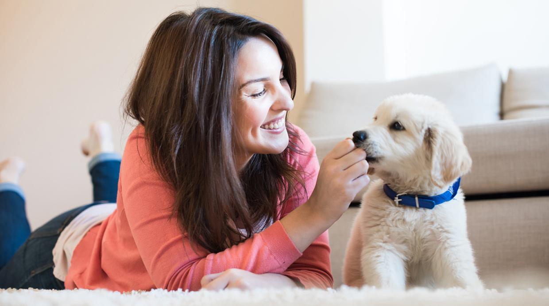 Ocho sentimientos que las mascotas generan a sus dueños