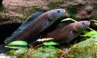 Más de 200 nuevas especies fueron descubiertas en el Himalaya