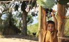 Chanchamayo, Villa Rica y Satipo: viaje al centro de la selva