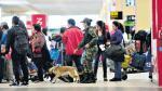 Droga en el Jorge Chávez: este año se decomisaron más de 900 kg - Noticias de oso gris