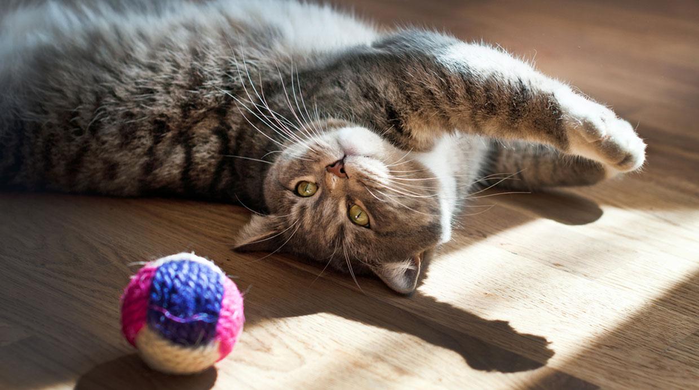Detalles a tener en cuenta para recibir un gato en casa