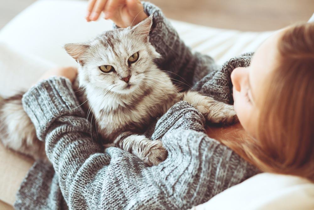 Elige una mascota de acuerdo con tu personalidad