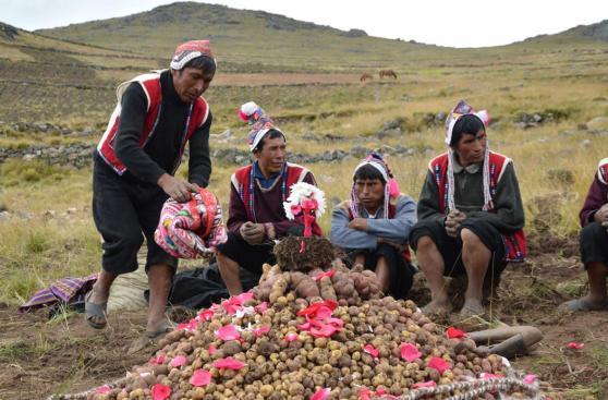 Conoce y disfruta las rutas del buen sabor peruano