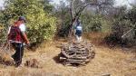 Lambayeque perdió en 10 años unas 70 mil hectáreas por tala - Noticias de hernan delgado