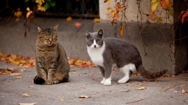 Sigue estas recomendaciones antes de adoptar un gato callejero