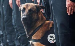 Diesel, el perro policía abatido por los terroristas en París