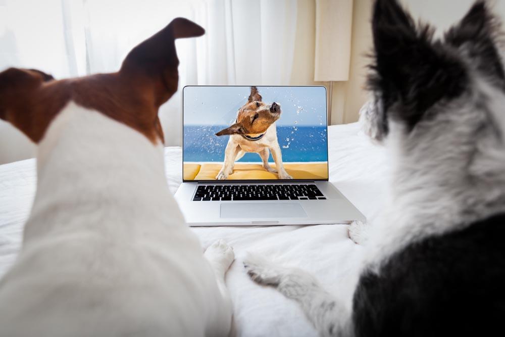 ¿Por qué tu perro no se emociona cuando te ve en FaceTime?