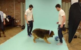 Selección uruguaya alentó adopción de mascotas con calendario