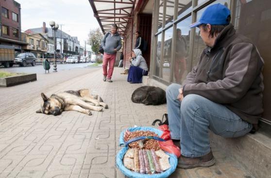 Para estos perros el desamparo no es mayor problema