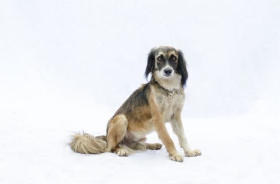 Perros sin hogar: WUF le da luz a los canes desamparados
