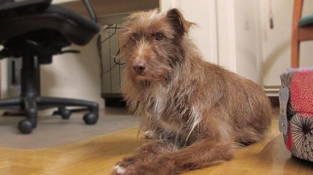 Perros en adopción: 10 consejos para los nuevos adoptantes