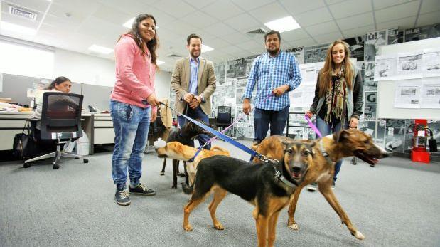 WUF y El Comercio, unidos contra el abandono de animales