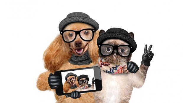 Estos son los perros y gatos más adorables de Instagram
