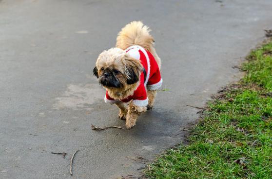 Cómo cuidar de tu mascota en Navidad y Año Nuevo