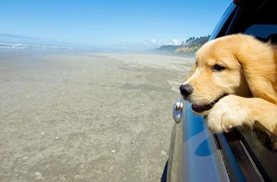 Diez consejos para viajar con tu mascota durante el verano