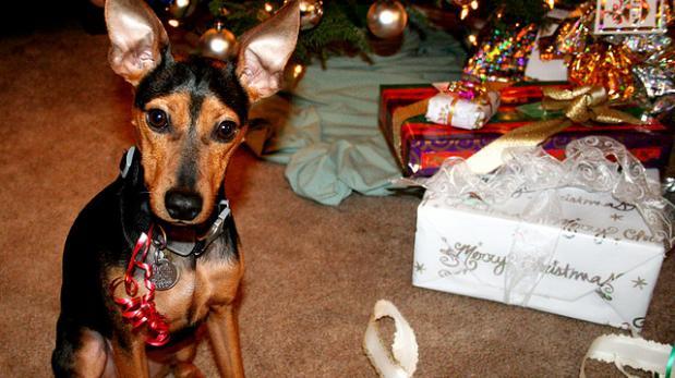 Regalar mascotas por Navidad ¿Buena idea?