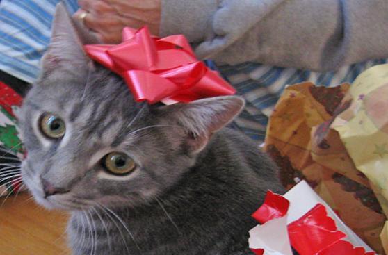 Qué hacer si el regalo vino con 4 patas