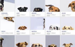 Decenas de perros piden un alto al fuego