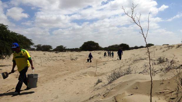 Piura: reforestan bosque seco con mil plantones de algarrobo
