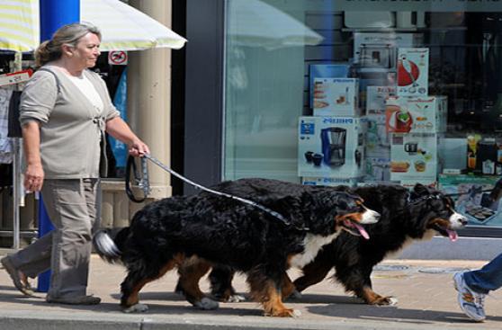 El paseo de tu perro: una guía completa