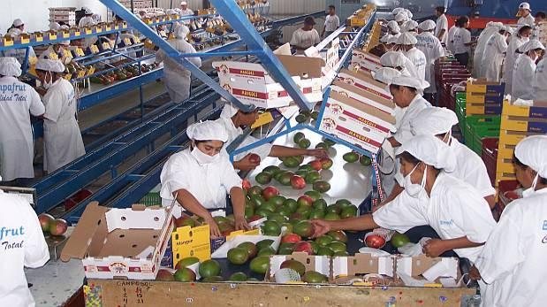 Envíos de mango a Corea del Sur se incrementan 214% a noviembre