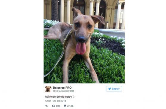 Mauricio Macri luce a su perro adoptado