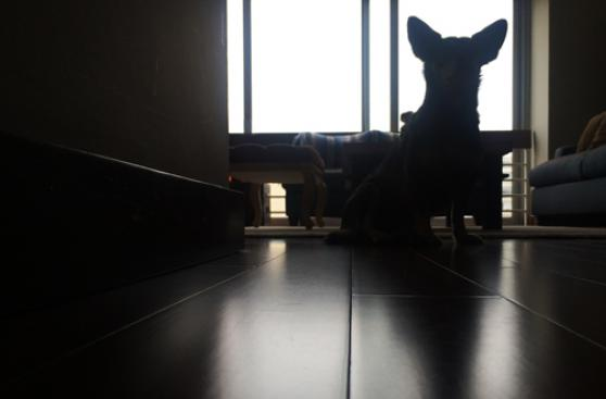 Cuando las sombras 'atacan' a tu mascota