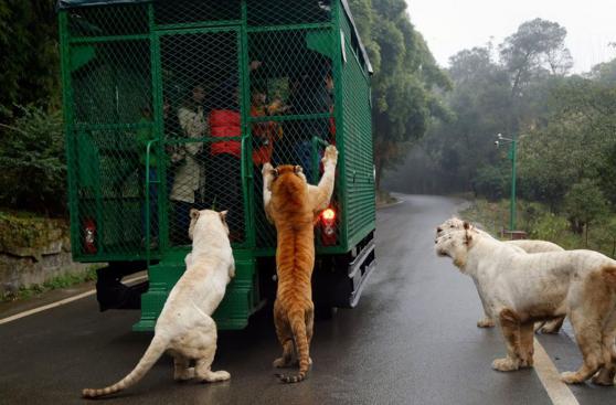 En este zoológico, los humanos y animales cambian de papel