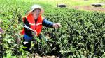 Puno: sector agrícola es declarado en emergencia - Noticias de serapio sucasaire