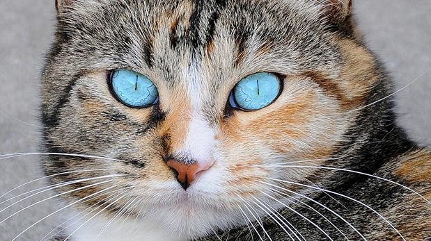 Guía para gato nuevo en casa