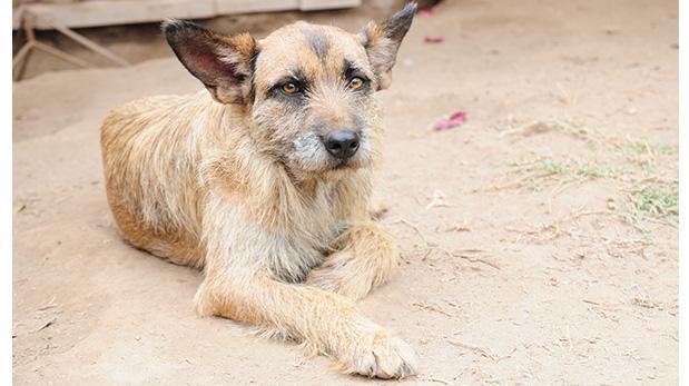¡Ayuda a cambiar la vida de más perros aquí!