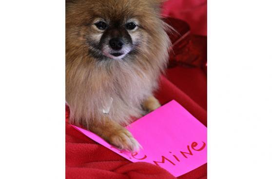 San Valentín puede afectar a tu mascota