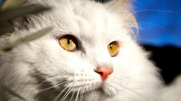 ¿Para qué personas son ideales los gatos?
