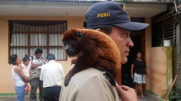 Perú es líder en tráfico de fauna silvestre