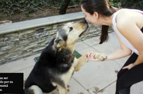 ¿Qué pasa cuando abandonas a tu mascota?